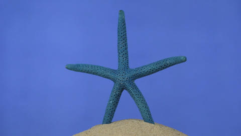Rotation of the blue starfish on the sand. Isolated Live Action