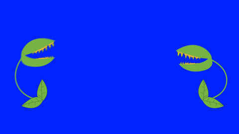 Cartoon 2 Venus Fly Traps Fighting on a Blue Screen Background Image