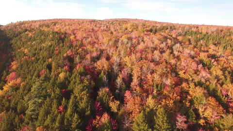 Fall Foliage Forest Colors- Brierly Brook, Nova Scotia Footage