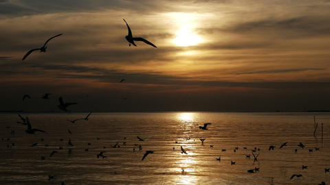 Flock of seagull birds flying at sunset sea Footage