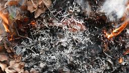 4K Burning Nut Tree and Thuja Leaves 1 Footage