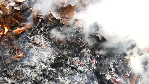 4K Burning Nut Tree and Thuja Leaves 2 Footage