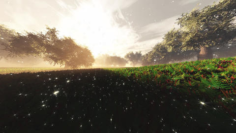4K Lush Fantasy Magic Garden with Fireflies Wide Angle Pan Flat Animation