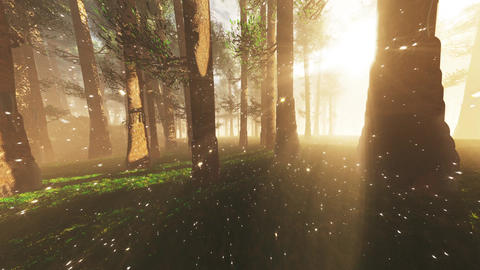 4K Mystic Fantasy Woods with Fireflies Wide Angle Pan Animation