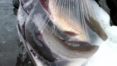 Too big catch of fish - pleasant challenge, Live Action