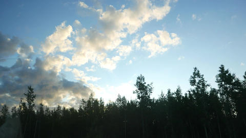 Bright fluffy clouds at blue sky, car ride at wood margin, look up to dark tops Footage