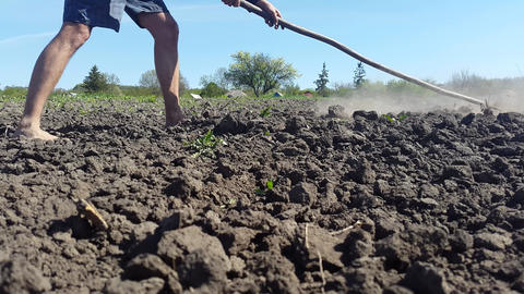 Man With Bare Feet Cultivates The Ground With A Rake Footage