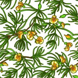 rooibos branch vector pattern Vector