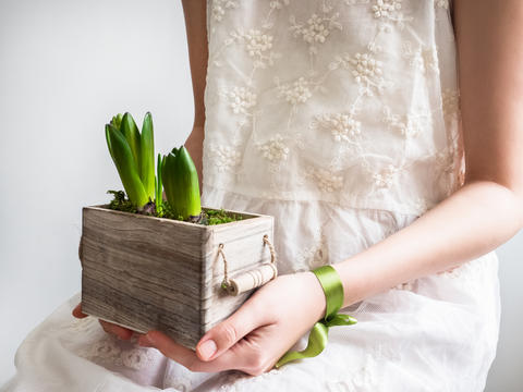 Female hands holding young sprouts of hyacinths Photo