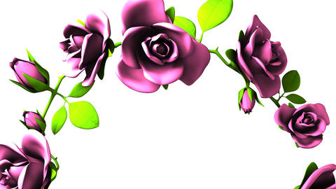 Pink Roses Frame On White Text Space CG動画
