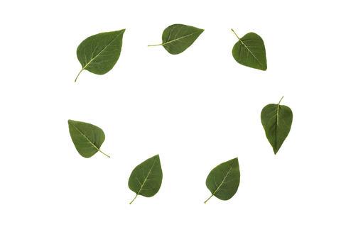 leaf, green, fall, fly, white background, tree, leaf, fresh, des Photo