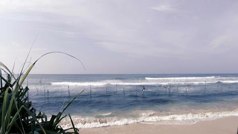 National fishing on poles in Sri Lanka. Indian Ocean Footage