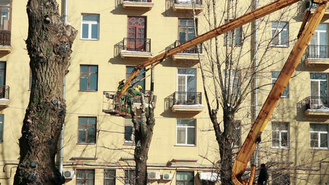 Pruning old high trees in the city Footage