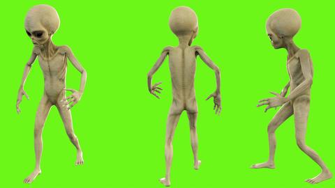 Alien look around. Loopable animation on green screen. 4k Animation
