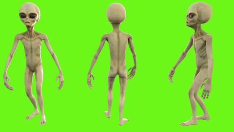 Alien walks. Loopable animation on green screen. 4k Animation