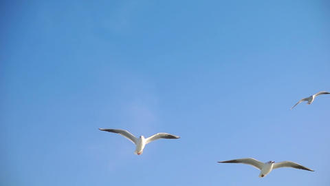 Bird Animal Seagulls Flying Image