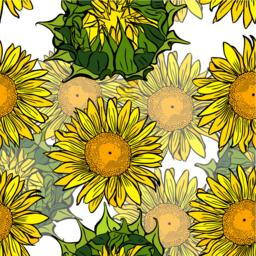 blooming yellow sunflowers and unblown green flower buds Vector