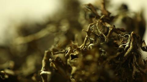 Grass Drug Mafia Footage