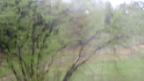 Bad weather. Bush blur behind rainy glass Footage