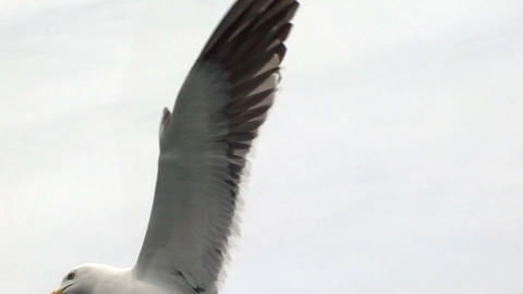Topic of North sea travel - seagulls over waves Footage