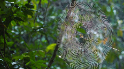 Long horned spider web Footage