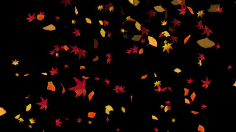 Autumn Leaves Falling Loop Animation