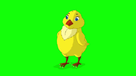 Yellow Chicken Standing and Looking Around Chroma Key Animation