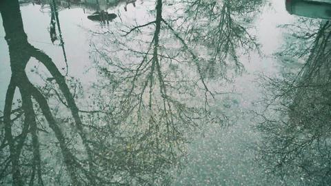 Rain Drops Falling On Asphalt in real time 4K video 영상물
