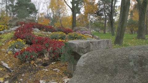 Landscape in Park Flowers and Stones Footage