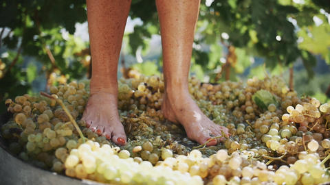 Women legs stomping white grapes in wooden shaft Live Action