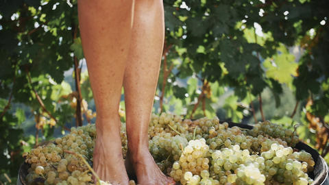 Women feet stomping white grapes in wooden shaft Live Action