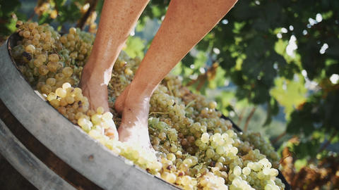 Person feet stomping white grapes in wooden shaft Footage