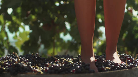 Legs of slim girl in white dress stomping grapes in wooden barrel Footage