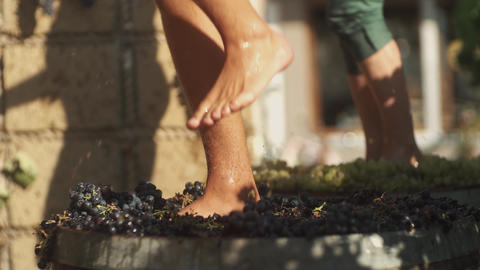 Two pair of male feet stomps grapes at winery making wine Footage