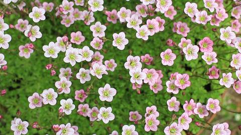 bright flowers swaying ビデオ