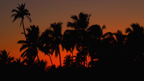 Indianred Color Sunset Palm tree Footage