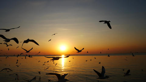 Seagulls are flying and the sunset in the sea ビデオ