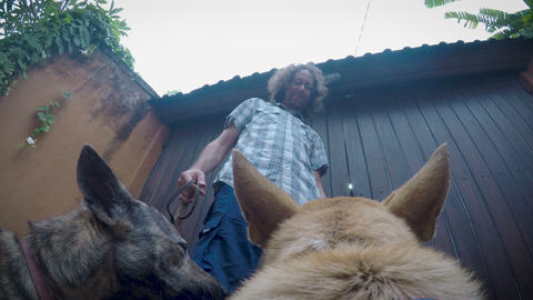 POV from a dog getting treats for good behavior from it's male owner after Footage