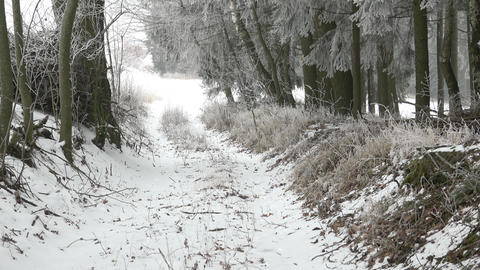 Scenic winter landscape.Trees in misty, gloomy winter day Footage