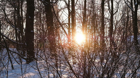 Snowflakes slowly fall at sunset in the forest among bushes and trees, a ビデオ