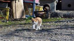 Kitten approaching ビデオ