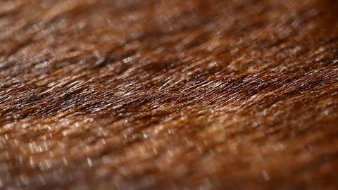 Animal skin Footage