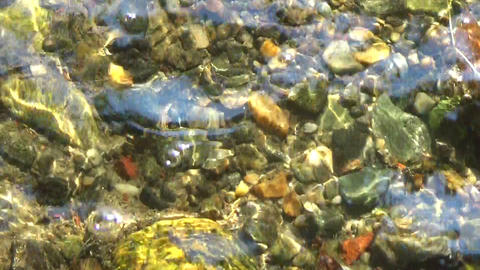 Water stream flowing and rocks at the bottom in the sun Footage