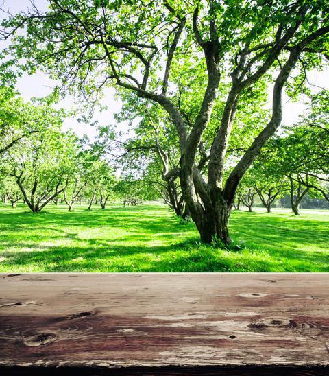 Park forest ecology background Photo