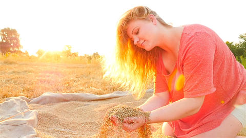 A beautiful girl is picking up a grain of wheat in her hands against the sunset Footage