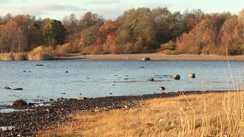 Golden autumn landscape Footage