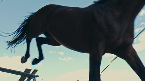 Close up of horse feet. Horse runs on the sand and jumps through a barrier. Slow Footage