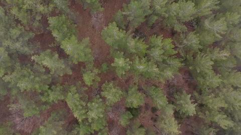 Aerial Shots: Misty dawn in the national park deer streams Footage