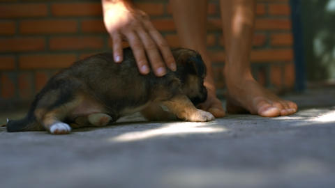 Person Strokes Small Puppy Teasing Fur near House Live Action