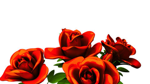 Red roses bouquet on white text space Animation